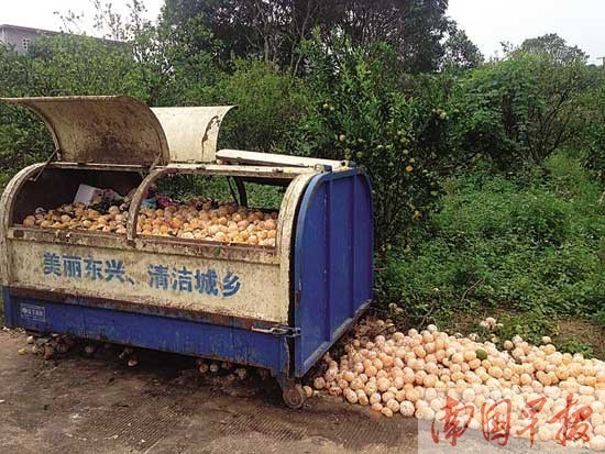 br>柑橘果肉成鸡肋被丢垃圾桶