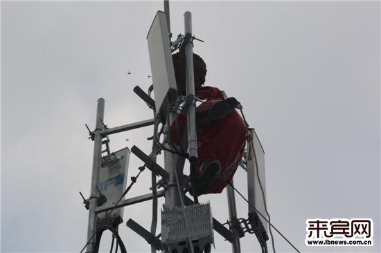 毒马蜂进驻信号塔 消防徒手登高排险