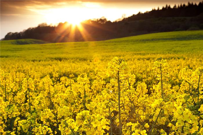"""风景好,四季有花开,出游不用愁""""……徜徉在油菜花"""