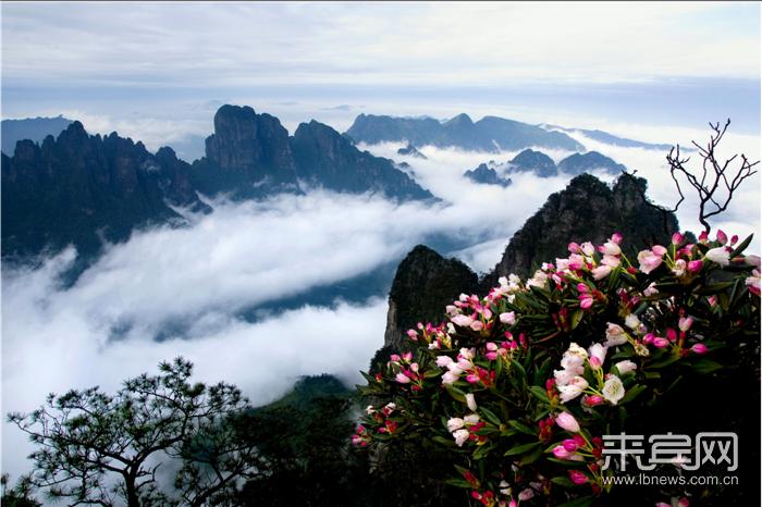 圣堂日出 圣堂山的清晨是寒凉的,负离子含量极高的空气,典当了旅者们