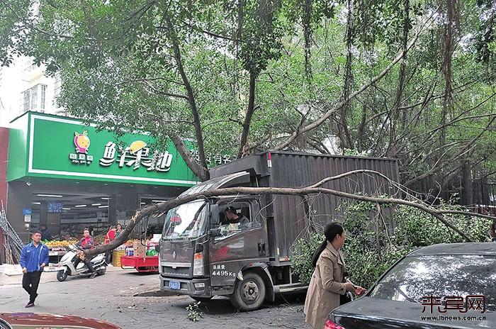 货车撞断路边树 险些砸中过路人